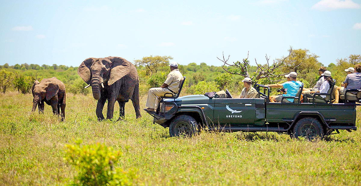 Ngala_Safari_gamedrive2.jpg