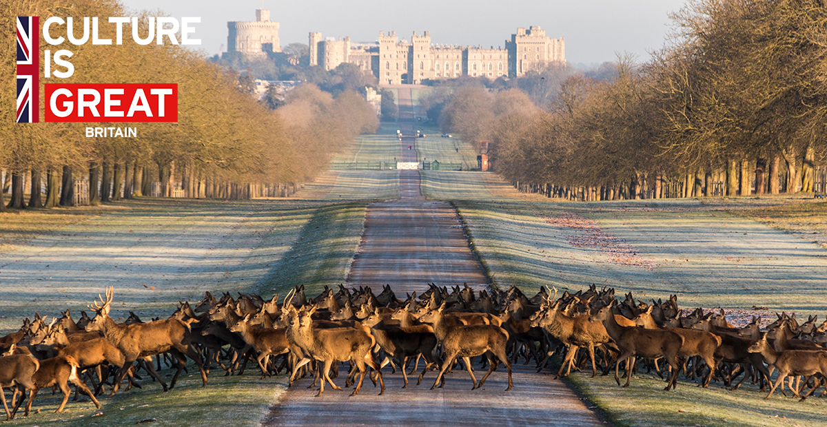 TTMo33_GB_Deer-Crossing-Windsor-Castle_England