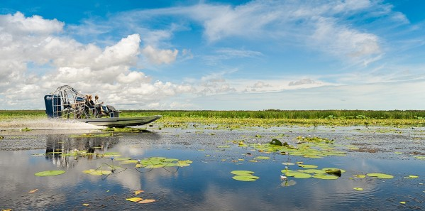 Airboating on Mary River floodplains