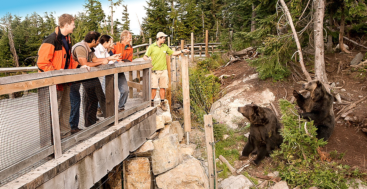 1128_VAN_Group-viewing-bears
