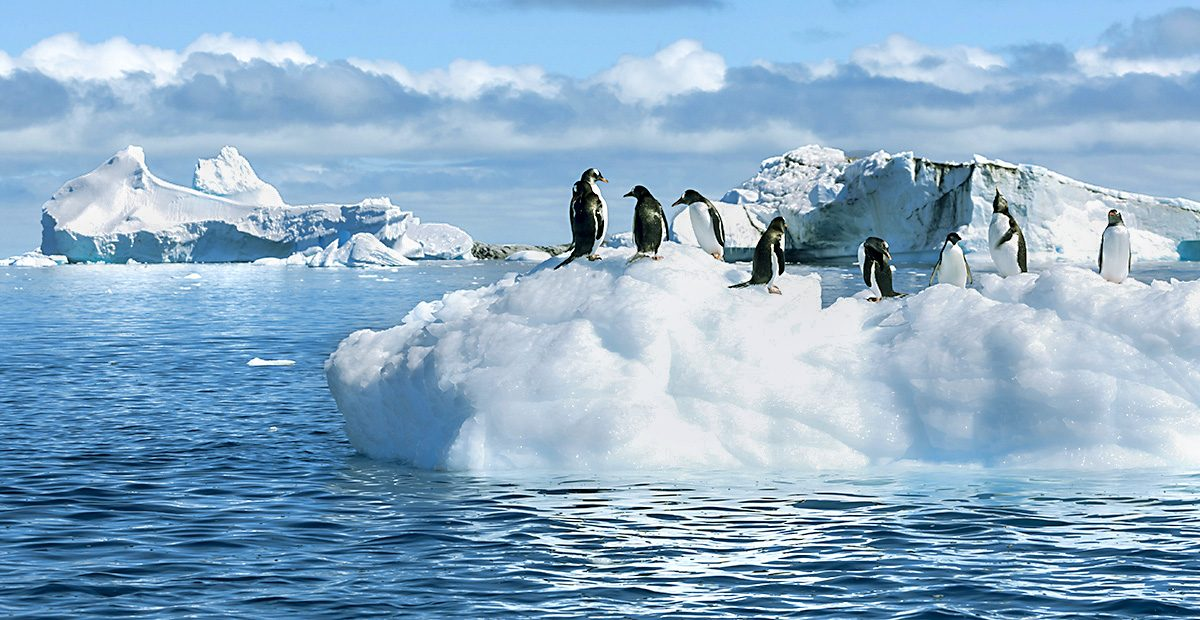 SIGN19457_TravelNow_Penguins2 shutterstock_230749363