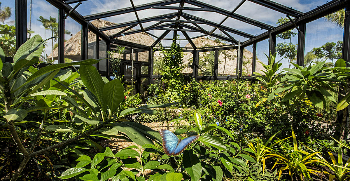22653_ncl_ncl_HarvestCaye_Butterfly_House_1032