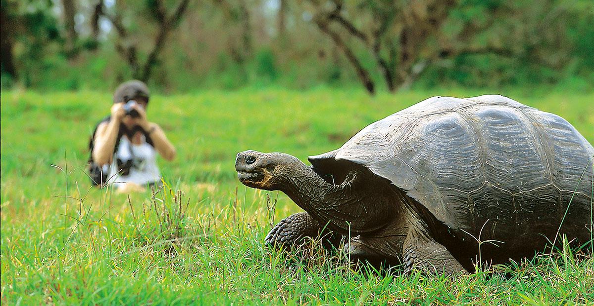 Guest, tortoise