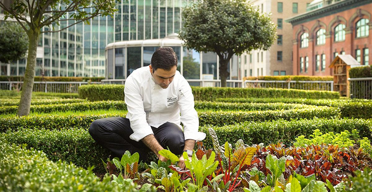 25513_VAN_Chef_in_Garden_553403_standard