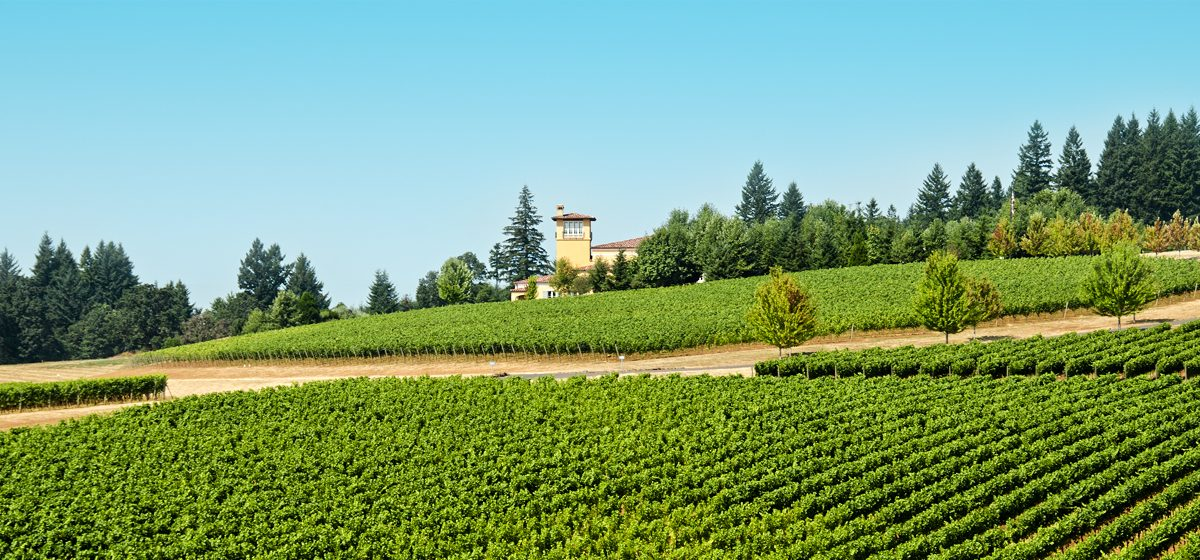 27902_SBK_vineyard-in-willamette-valley-oregon-85559122